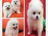 杭州阿拉斯加一只多少钱 杭州哪里有狗卖杭州州宠物市场