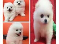 南京哪里有狗卖 南京宠物市场 南京哪里有犬舍