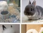 琳之家宠物店出售仓鼠金丝熊荷兰猪宠物兔