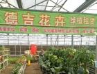 西宁永恒绿植花卉租赁出售