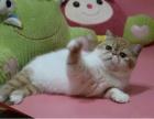 东莞 哪里有卖加菲猫 多少钱