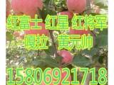 山东红富士苹果价格  35E