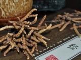 禅城回收冬虫夏草价格只会越来越高