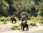 户外大连去泰国旅游_下周四泰国跟团游6天特价