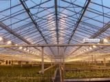 凯创光电植物生长灯的销售旺季