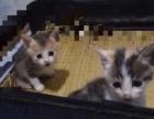 可爱 猫咪寻找爱心主人(价格面议)