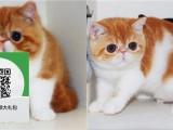 大连哪里卖加菲猫 大连哪里有宠物店 大连哪里卖宠物猫便宜