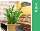 绿植租摆、办公室绿植养护、火车站附近