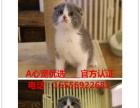 出售加菲猫 波斯猫 金吉拉 异国短毛猫 保健康