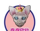 《爽爽欧洲宠物引进》出售布偶猫无毛猫招代理