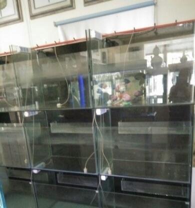 玻璃鱼缸(上虑)