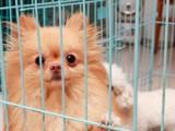 A鄭州 寵愛寵物 國內寵物托運 寄養