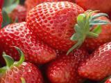 蚌埠草莓苗厂商 优选品质