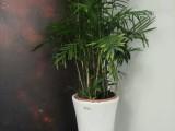 杭州淳安花卉綠色植物租擺