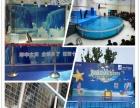 活体企鹅展览租赁/海洋生物主题展览出租供应大型鱼缸