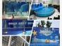 租赁海洋展 观赏鱼缸海洋生物展览海狮企鹅展出租