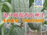 拇指西瓜种子 小西瓜种子 瓜果蔬菜种子