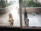 狗猫兔寄养 宠物别墅度假 按主人的要求寄养 有接送
