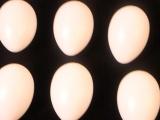 复活节 复活蛋 塑料彩蛋 节日装饰 7CM塑料白蛋