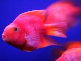 专业清洗鱼缸 鱼缸养护 观赏鱼租摆 鱼缸定做搬运等