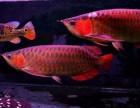 北京集鼎龙水族专业清洗鱼缸 鱼缸维护 鱼缸搬家