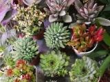水族,鲜花,开业花篮,清洗鱼缸,桑叶,蚕宝宝