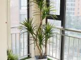 仿真龙血铁植物树大型落地盆栽景样板间装饰假花仿真客厅室内