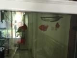 银龙鱼鹦鹉鱼地图鱼全出了,