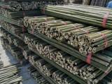 唐山綠化支撐桿 唐山杉木桿 唐山彩條布