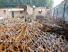高价回收安徽废钢