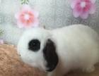 白雪宠物兔舍