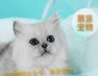 【萌派宠物】可信赖的宠物购买平台,精品布偶猫