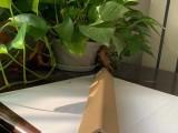 德州焊材現貨紙護角紙包角