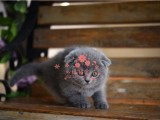 南宁哪里有卖蓝猫的最便宜多少钱一只