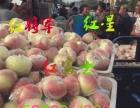 山东红富士苹果陆续上市