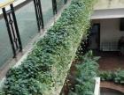 花卉绿植租赁专业设计室内绿化
