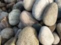 川沙批发天然鹅卵石 变压器鹅卵石5-8厘米