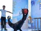 海洋展租赁海狮表演出租海洋水母展出租