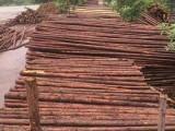 衡水优质1米到8米绿化杉木杆杉木杆报