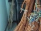 江岸区江汉区后湖片区上门电脑专业维修