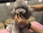 沧州哪里有宠物美容培训学校呢