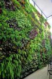 建筑墙面绿化 垂直绿化 植物墙绿化 墙体绿化