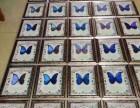 兰州蝴蝶科普展 蝴蝶标本制作礼品加工 蝴蝶展品租赁出售