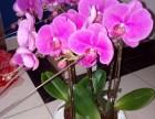 静海区绿植租赁花卉租赁养护公司