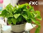 成都武侯区植物租摆公司教你棕竹的养殖的方法