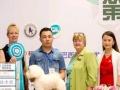 山东首位双协会双A级宠物美容师开始授课了八折优惠中