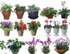 花卉绿植基地价批发,租摆,园林绿化,会场布置