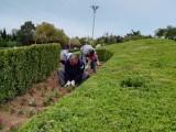 园林绿化室外植物墙生产设计施工厂家直销 免费上门