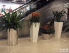 深圳花卉租摆苗木绿化租赁公司哪家好?