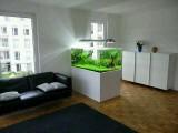 长沙室内生态景观定做 雨林景观 生态鱼缸就找 南国水景
